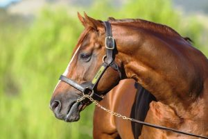 Husson Stallion – It Was Him That Was Racing